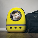 1119-Pet-Custody-Cat